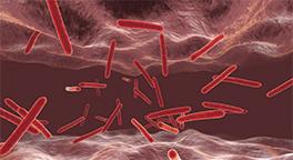 헬리코박터균